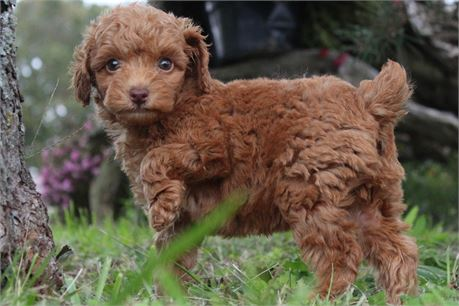 EXCELLENT RED BABY BOY!!! L@@K AT THIS BEAUTIFUL BOY!!!